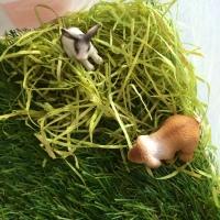 detail bac sensoriel herbe lapin