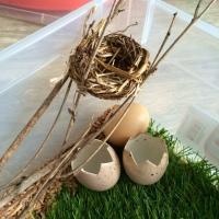 detail bac sensoriel oeufs nid