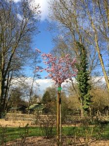 cerisier-paques-hanami