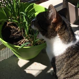 chat-mange-jonquille