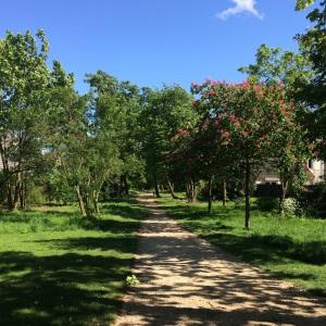 parc-urbain-bois