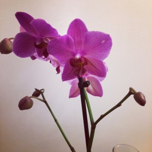 orchidee-cadeau-mariage